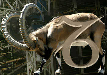 A goat and the symbol for Capricorn.